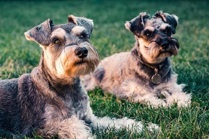 VIRBAC VETERINARY HPM U1 DOG DISSOLUTION & PREVENTION 12KG